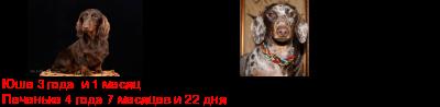 [img]http://flines.ru/timelines/1021544.png[/img]