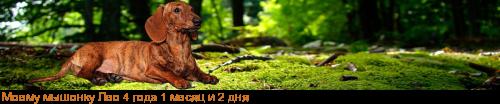 [img]http://flines.ru/timelines/1100283.png[/img]
