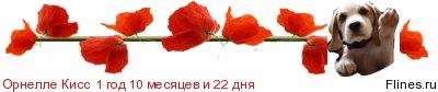 http://flines.ru/timelines/1135322.jpg