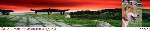Печальный опыт покупки щенка в питомнике Хандзимэмасите - Страница 7 1192160