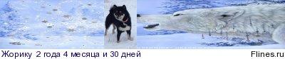 Вес щенка - Страница 3 1246972