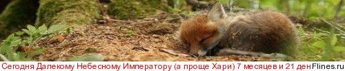 """Собака """"разносит"""" квартиру! SOS!!!!!!!! - Страница 8 1269811"""
