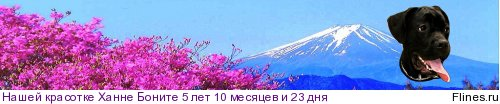 http://flines.ru/timelines/251111.jpg