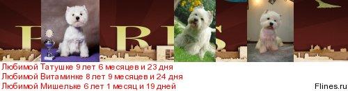 Вопросы разведения породных щенков вести и их реклама на породном форуме! - Страница 4 290510