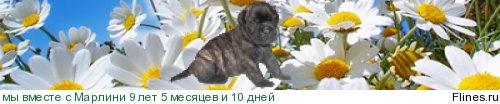 http://flines.ru/timelines/353955.jpg