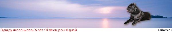 ОЛЛАДА АРЛЕКИН  ВЕРДИ - Страница 3 570259