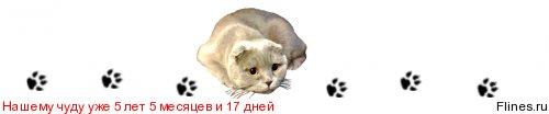 Как взвесить кота в домашних условиях?  753109