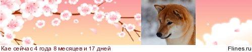 ICHIRO HIROSHI 853133