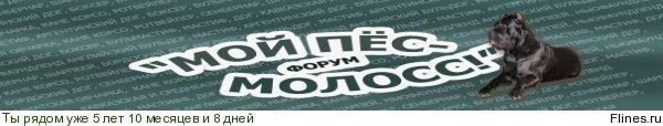 http://flines.ru/timelines/892042.jpg