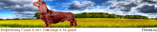 [img]http://flines.ru/timelines/926151.png[/img]
