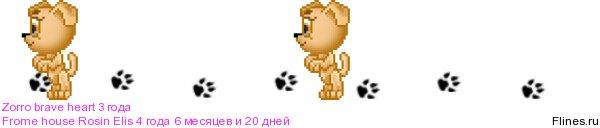 Ошейники кожаные для крупной собаки 961404